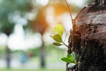 plants-growing-of-stumps-PWZMA5K